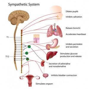 Sympatisch zenuwstelsel