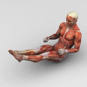Man menselijke anatomie en spieren
